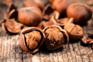 Hazelnuts with open shells
